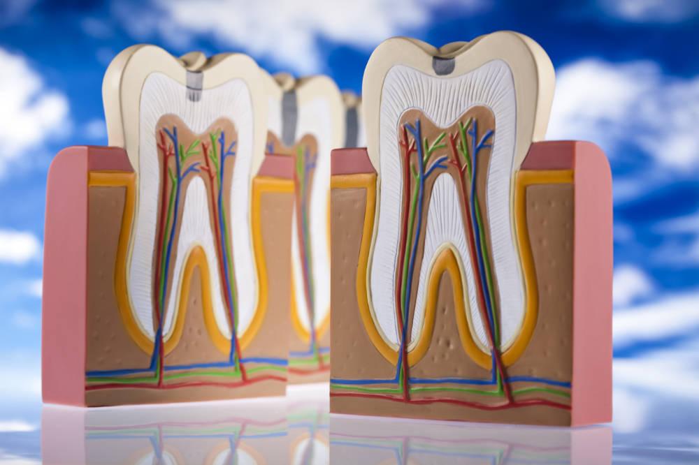 Información endodoncia en Clínica dental Bayona